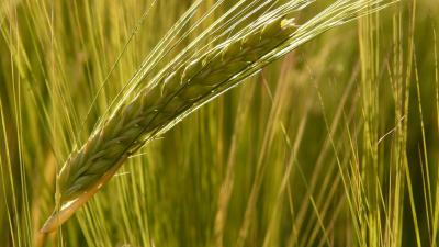 Ingyenhitel az agráriumnak: jön az Új Agrár Széchenyi Kártya